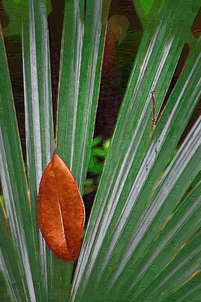Photograph - Don't Leaf by Donna Bentley