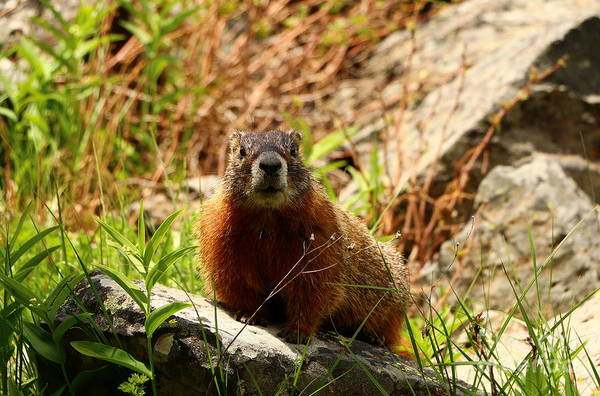 Marmot Photograph - Don't Leave Me Alone by Christiane Schulze Art And Photography