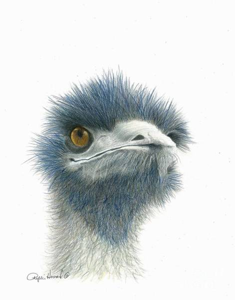 Drawing - Dont Mess With Emu by Phyllis Howard