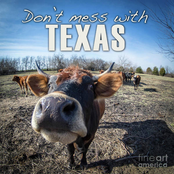 Digital Art - Don't Mess With Texas by Cheryl McClure
