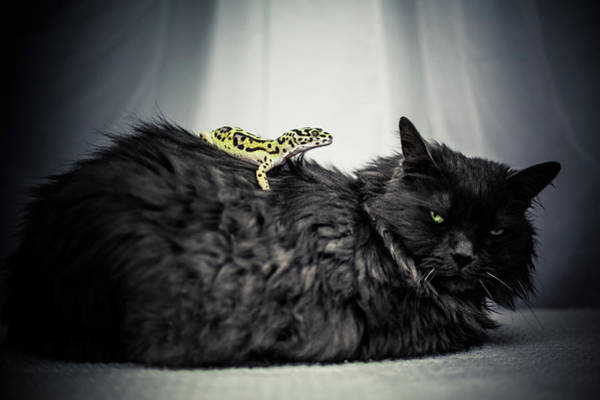 Photograph - Don't Mess With The Pets by Jeanette Fellows