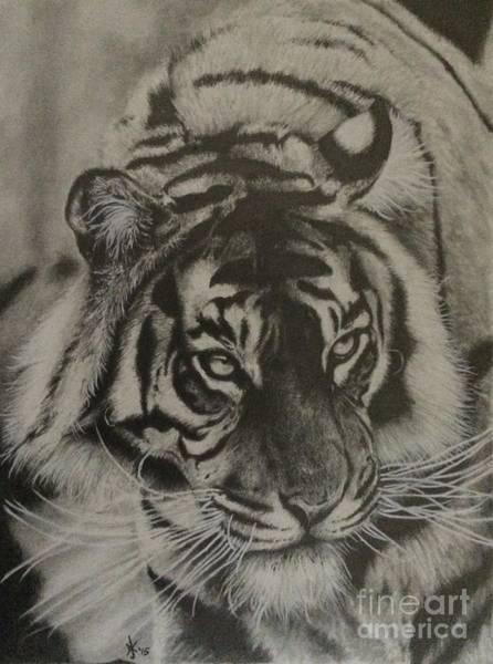 Sumatran Drawing - Don't Mistake My Silence For Weakness by Damon Kilgo