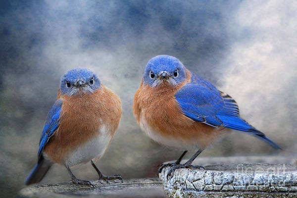 Wall Art - Photograph - Don't Ruffle My Feathers by Bonnie Barry