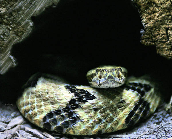 Rattlesnake Photograph - Don't Tread On Me by JC Findley