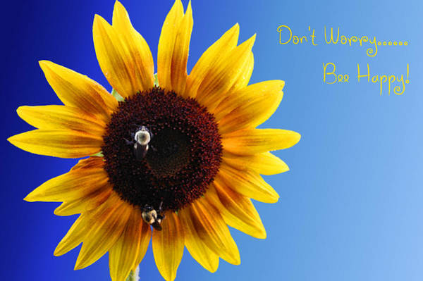 Photograph - Don't Worry Bee Happy by Kristin Elmquist