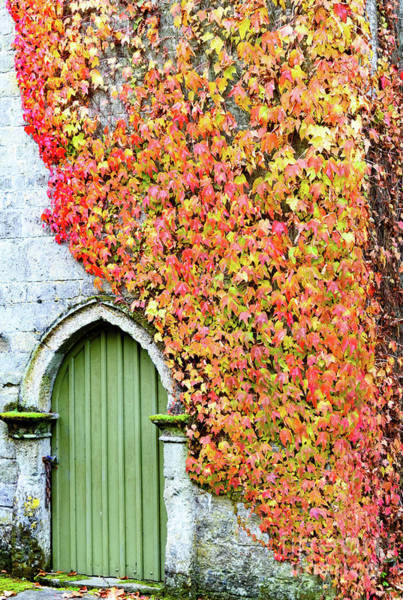 Photograph - Door And Ivy by Colin Rayner