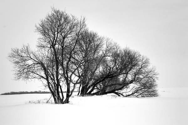 Photograph - Dormant  by David Matthews