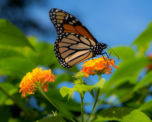 Nectar Photograph - Dote by Don Spenner