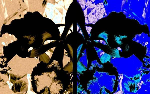 Wall Art - Digital Art - Double Black Orchid by Will Borden