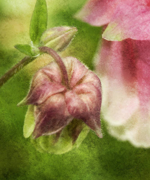 Digital Art - Double Columbine by Ann Lauwers