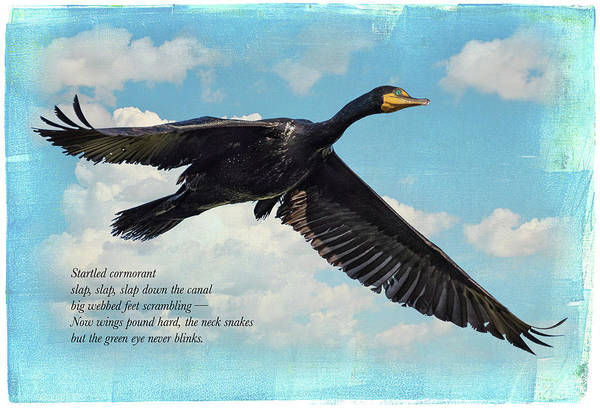 Japanese Poetry Wall Art - Digital Art - Double-crested Cormorant by John Williams