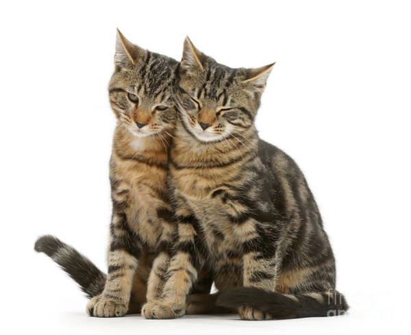 Photograph - Double Cuddle Huddle Copy Cats by Warren Photographic