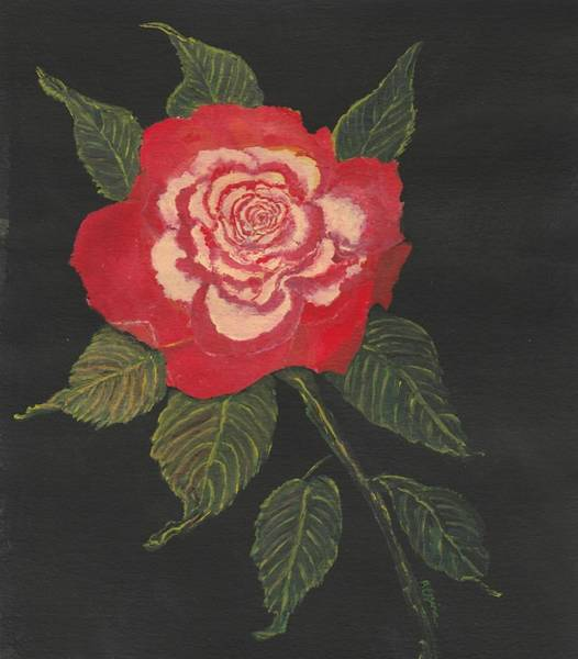 Painting - Double Delight Rose by Regina Taormino