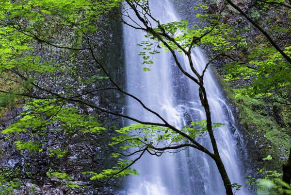 Photograph - Double Falls by Robert Potts