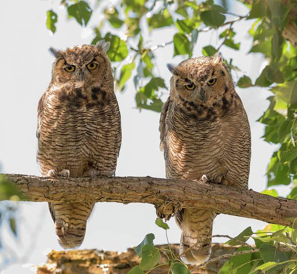 Photograph - Double Owl Bonus by Loree Johnson