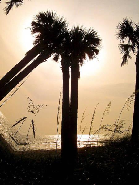 Photograph - Double Palms by Trish Tritz