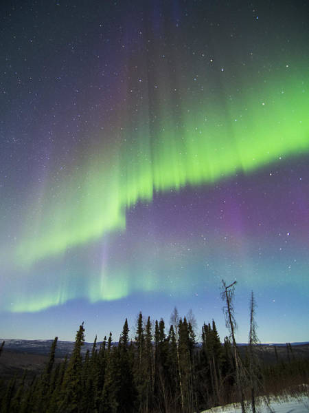 Photograph - Double Purple Aurora by Ian Johnson