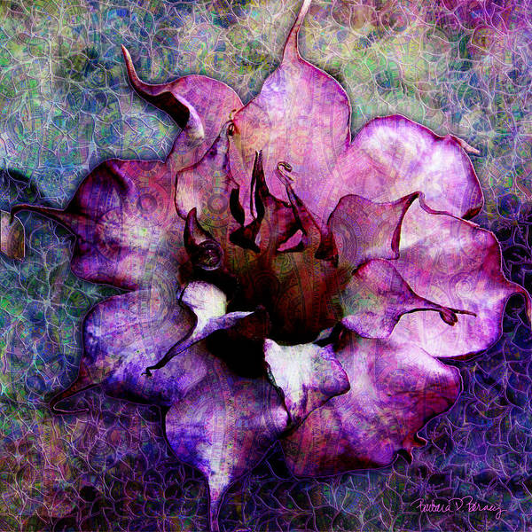 Digital Art - Double Purple Datura by Barbara Berney