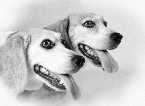 Photograph - Double Trouble by Sue Collura
