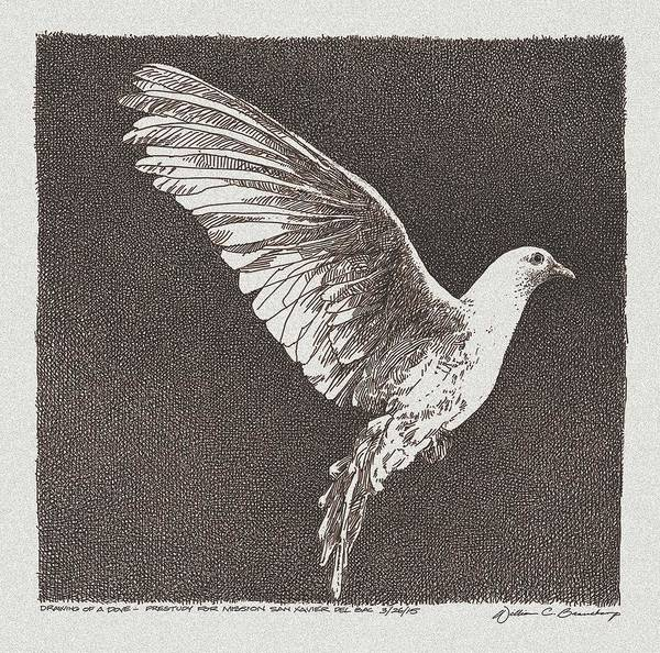 Dove Drawing - Dove Drawing by William Beauchamp