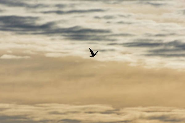 Photograph - Dove In The Clouds by Douglas Killourie