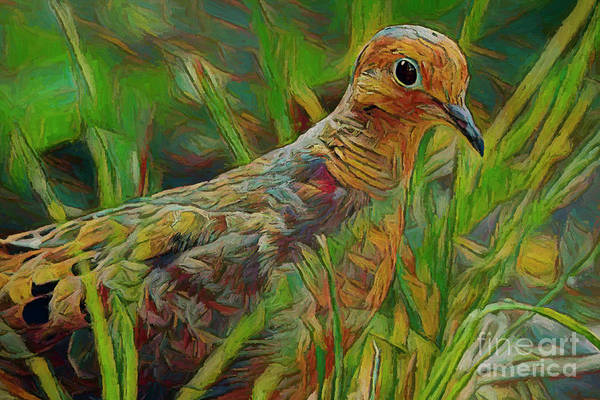 Photograph - Dove Painterly by Deborah Benoit