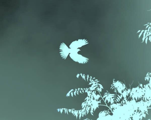 Mixed Media - Doves Flight by Lesa Fine