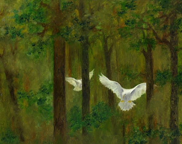 Painting - Doves In The Wood by FT McKinstry