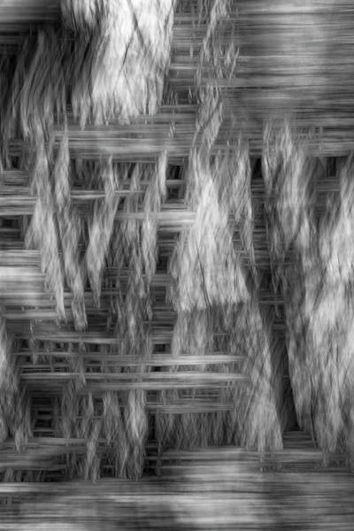 Photograph - Dovetail Of Dark Into Light by Deborah Hughes