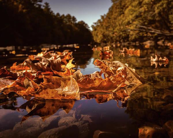 Photograph - Down A Lazy River by Bob Orsillo