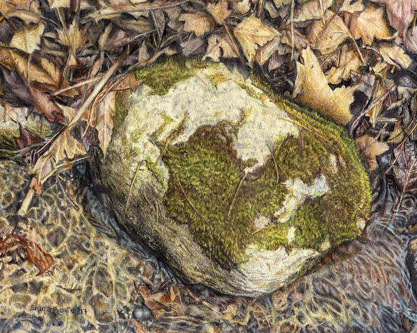 Litter Drawing - Down By The Stream  by Shana Rowe Jackson