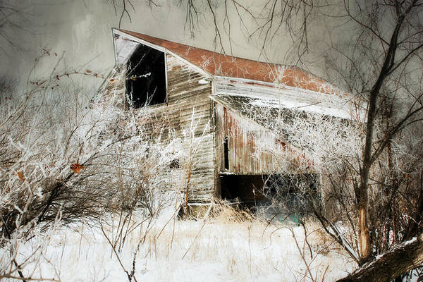 Photograph - Down In The Ravine  by Julie Hamilton