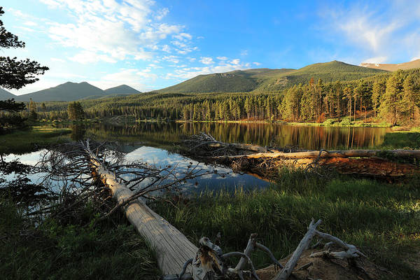 Photograph - Downed Tree At Sprauge Lake by Sean Allen