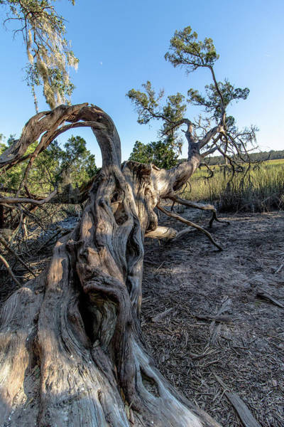 Photograph - Downed Tree by Mike Dunn