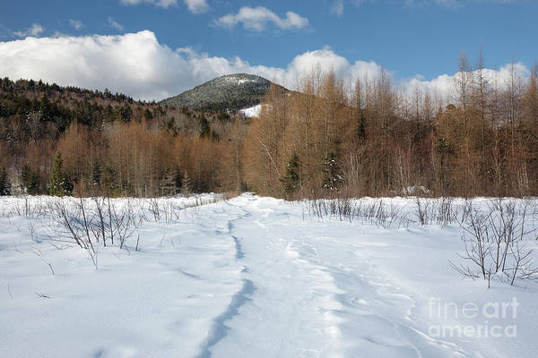Photograph - Downes - Oliverian Brook Ski Trail - White Mountains New Hampshire  by Erin Paul Donovan