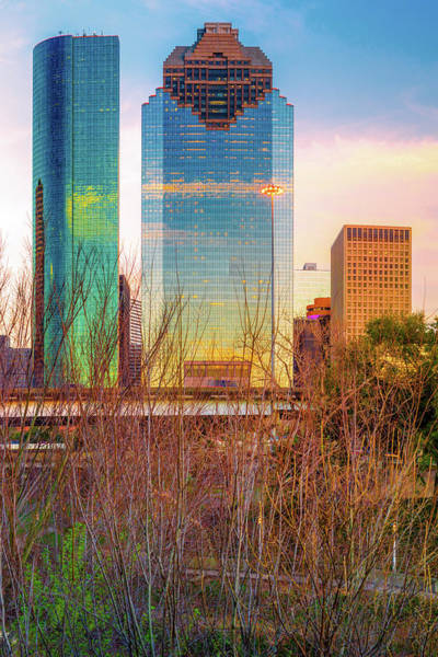 Photograph - Downtown Houston Skyline Through The Trees by Gregory Ballos