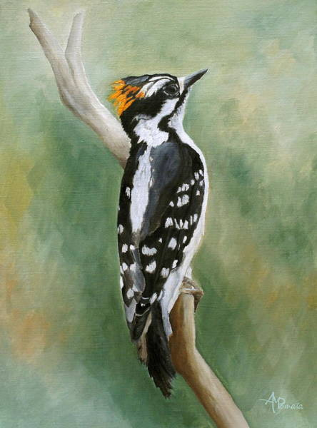 Painting - Downy Woodpecker by Angeles M Pomata