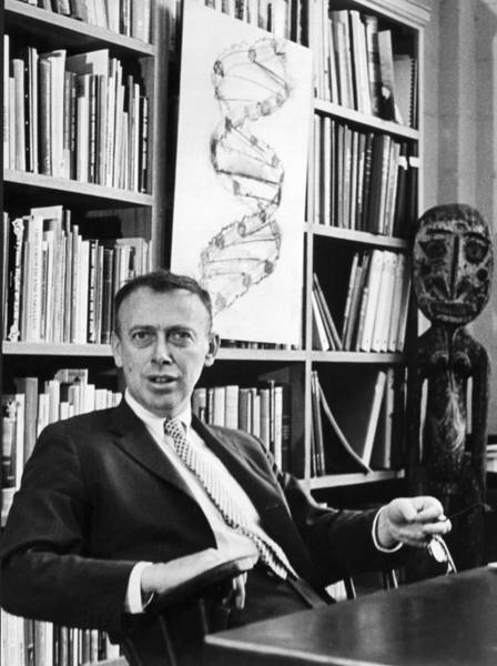 Nobel Prize Winners Wall Art - Photograph - Dr. James Watson And Dna Helix by Underwood Archives