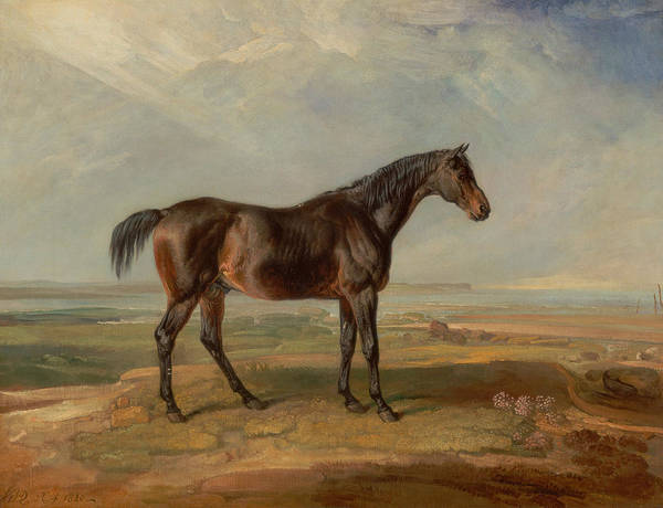 Ward Painting - Dr. Syntax, A Bay Racehorse, Standing In A Coastal Landscape, An Estuary Beyond by James Ward