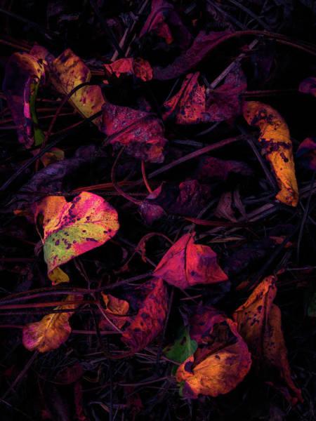 Photograph - Dragonblood by Alexander Kunz