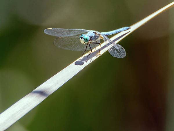 Photograph - Dragonfly  0408-051917 by Tam Ryan