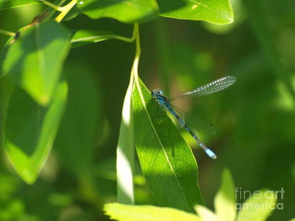 Photograph - Dragonfly 20 by Vivian Martin