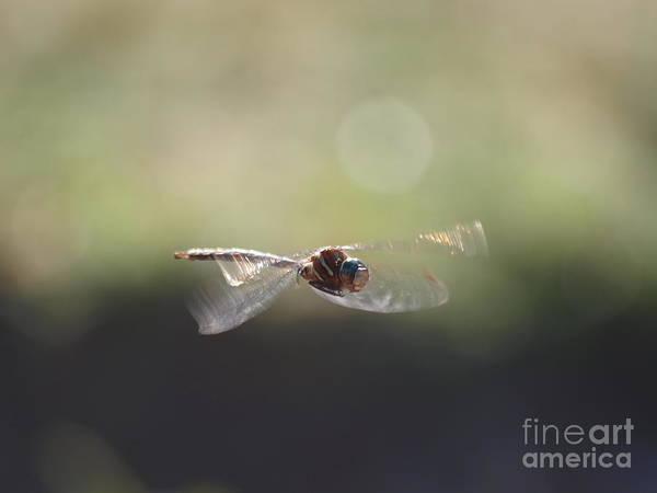 Photograph - Dragonfly 21 by Vivian Martin