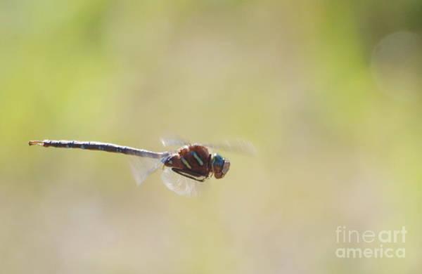 Photograph - Dragonfly 3 by Vivian Martin