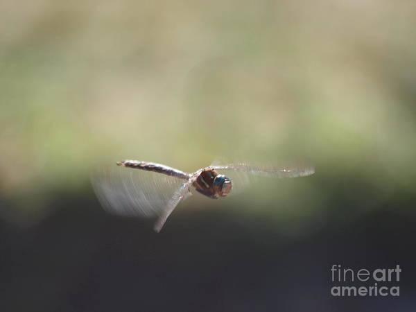 Photograph - Dragonfly 4 by Vivian Martin