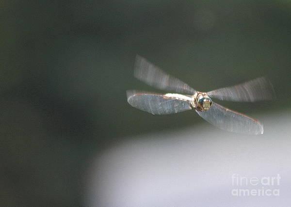 Photograph - Dragonfly 6 by Vivian Martin
