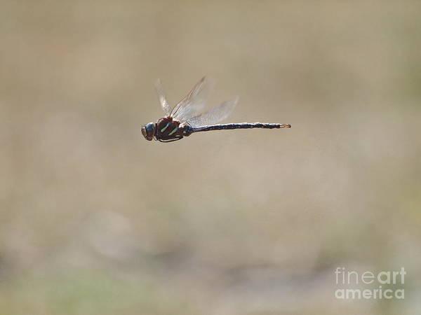 Photograph - Dragonfly 7 by Vivian Martin