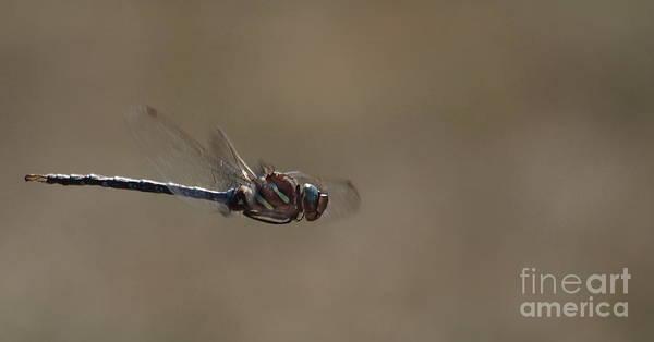 Photograph - Dragonfly 8 by Vivian Martin