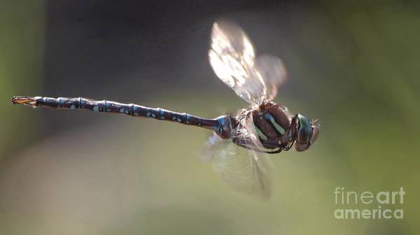 Photograph - Dragonfly 9 by Vivian Martin