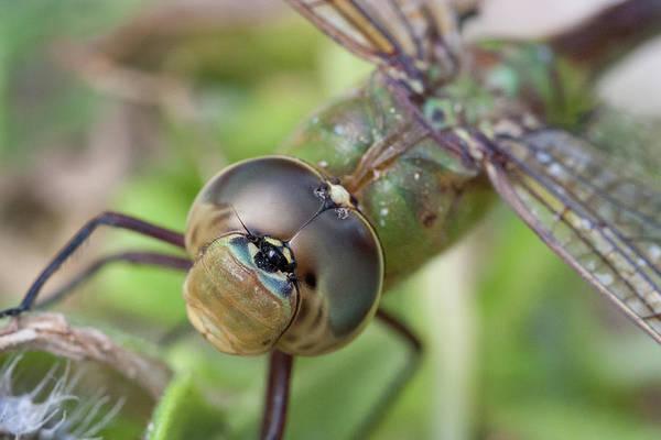Photograph - Dragonfly Bull's-eye by Paul Rebmann